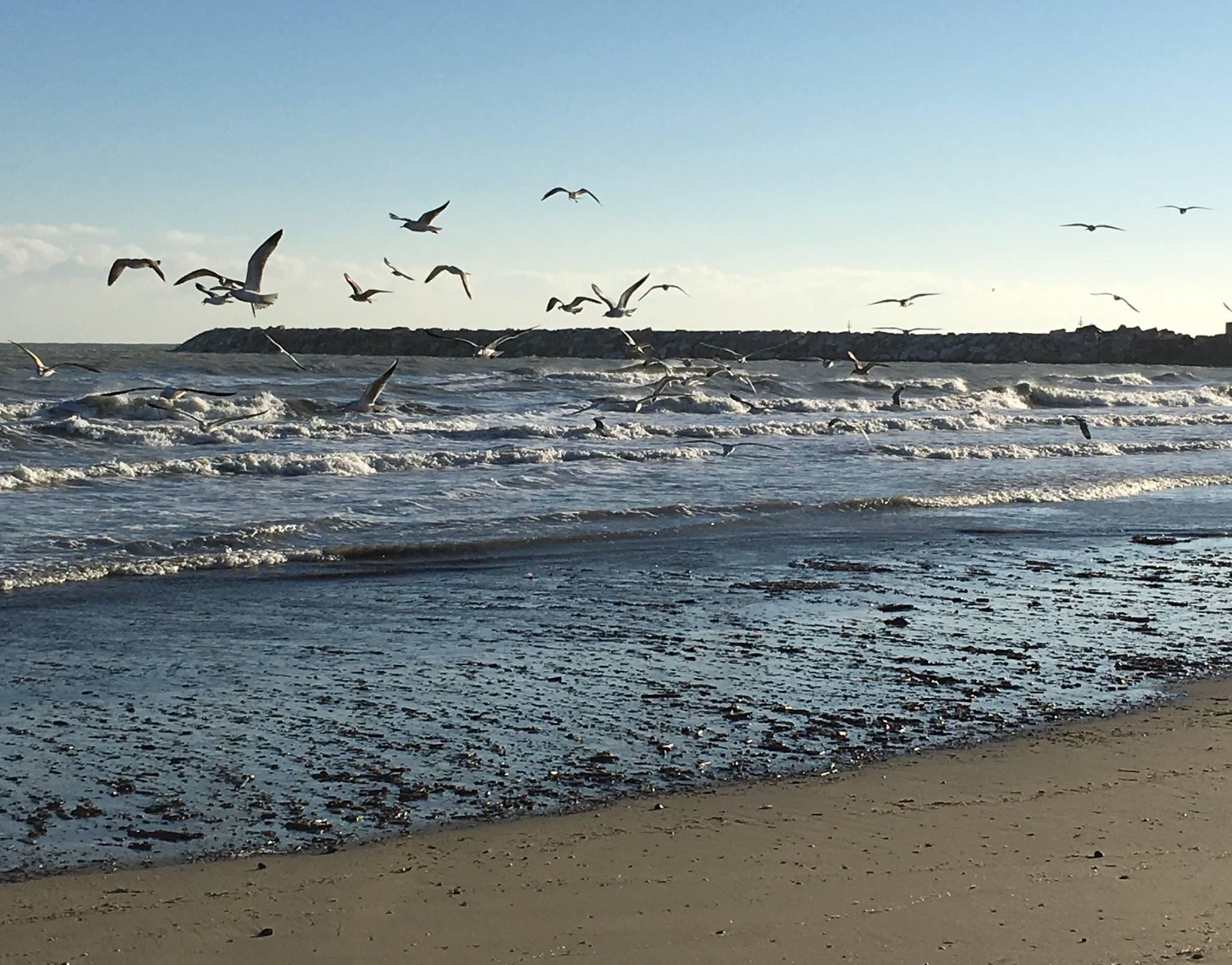 Giulianova spiaggia beach mare sea porto sabbia