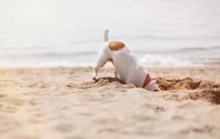 Unica Beach Spiaggia per cani amici a 4 zampe