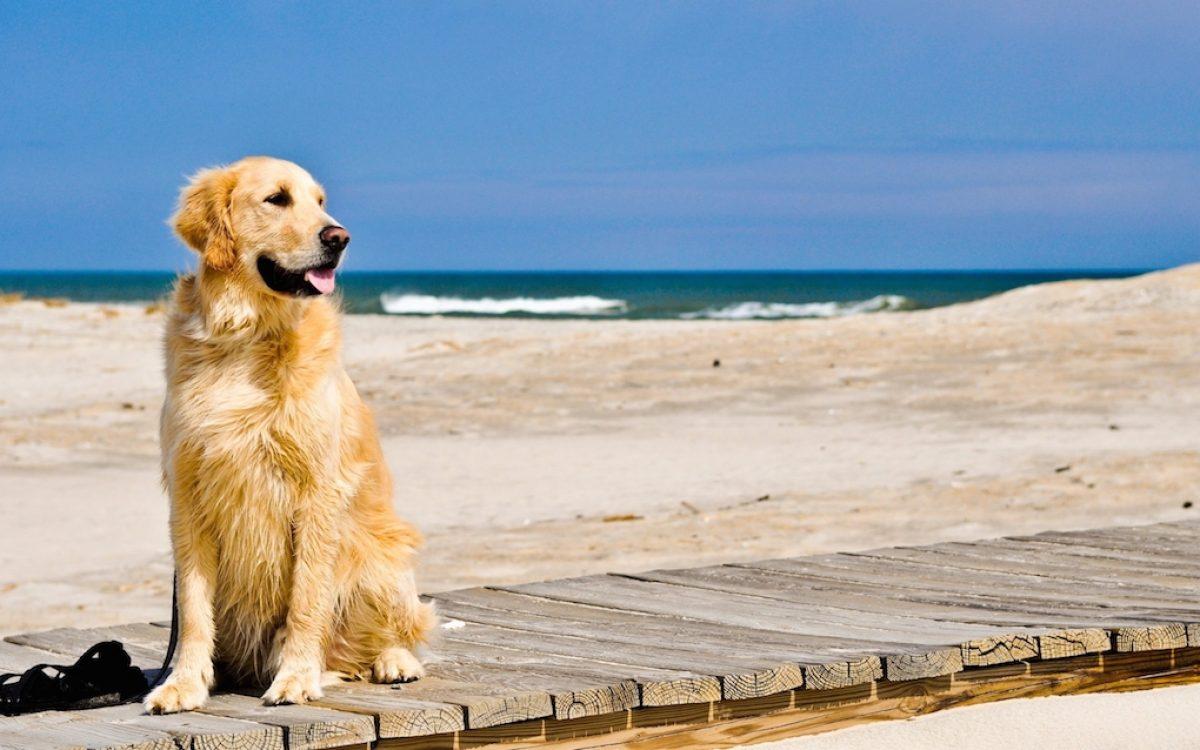 Unica Beach Giulianova Spiaggia per Cani Giulianova