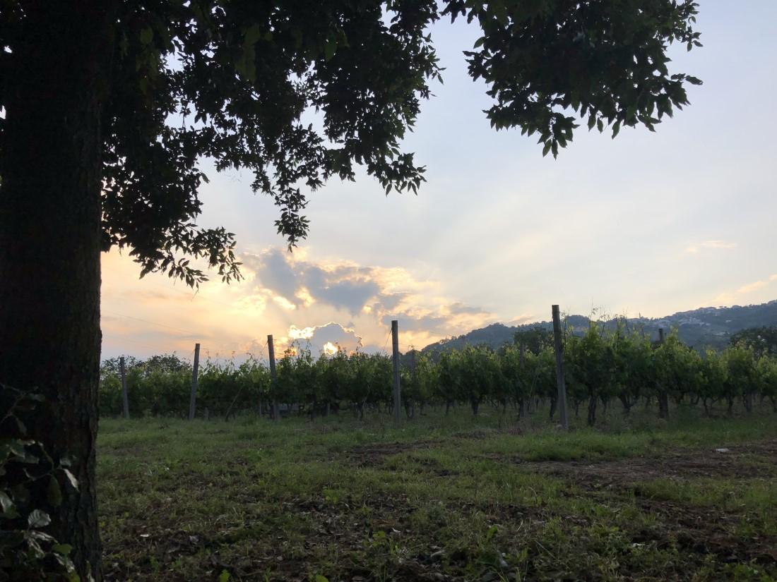 Vigneto Abruzzo Vino Wine Montepulciano Trebbiano Pecorino Enogastronomia Natura Nature